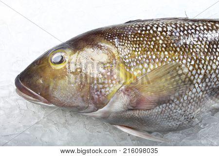 Fishmonger with fresh sea fish