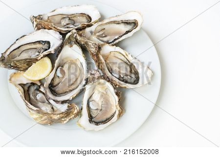 Oysters. Raw fresh oysters with lemon are on white round plate, image isolated, with soft focus. Restaurant delicacy. poster
