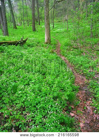 Narrow trail through understory vegetation at Apple River Canyon State Park of Illinois