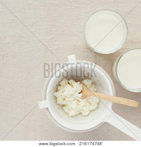 Organic probiotic milk kefir grains Tibetan mushrooms in plastic sieve and kefir milk in glass containers
