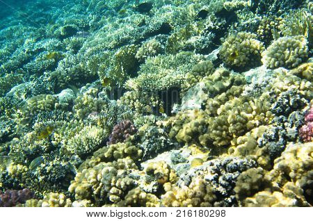 Bright coral carpet on the seabed, reef