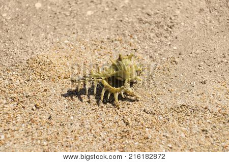 Crab hermit in the shell, on the beach, on the sand