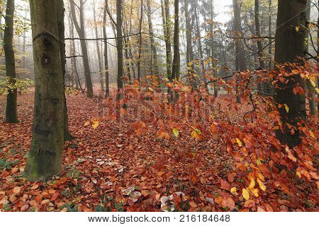 Beechwood Voderady - large beech forest with rare species of plants and animals