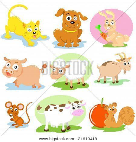 pet animal
