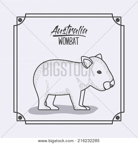 australia wombat in frame and monochrome silhouette vector illustration