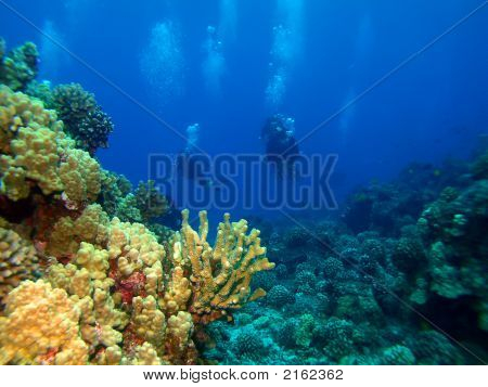 Colorful Reef And Divers