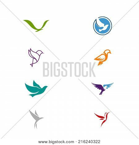Isolated abstract black and white birds, butterflies wings with feathers logo set. Flight logotype collection. Air icons. Vector birds illustration. Eagle, pigeon, hawk silhouette .
