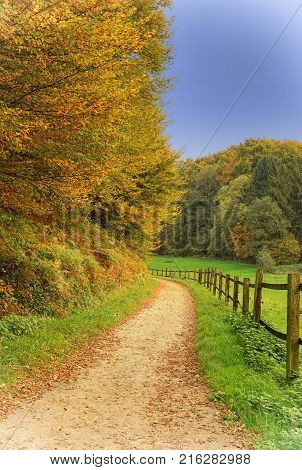 Hiking trail during autumn season in the late hours of a sunny day, Odenthal, Germany