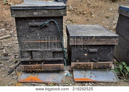 Detail of the bee hives in a field. Bees swarming in front of the hive entrance.