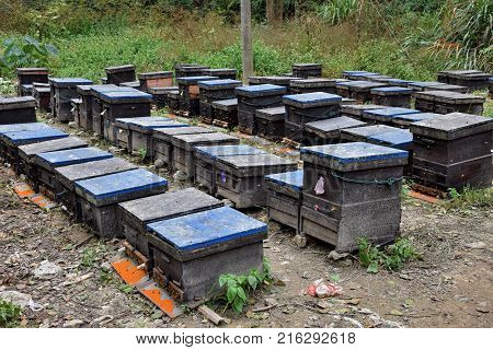 The rows of bee hives in a field. Bees flying around the hives.