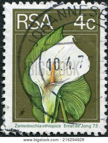 SOUTH AFRICA - CIRCA 1974: A stamp printed in South Africa (RSA), show the flower Zantedeschia aethiopica, circa 1974