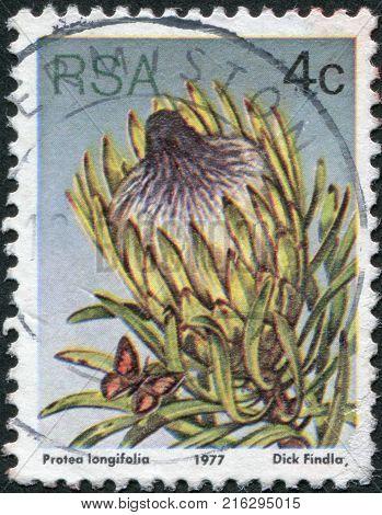 SOUTH AFRICA - CIRCA 1977: A stamp printed in South Africa (RSA), a flower bush Protea longifolia, circa 1977