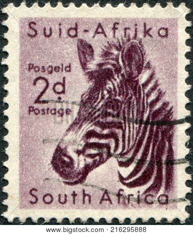 SOUTH AFRICA - CIRCA 1954: A stamp printed in South Africa, is depicted Mountain zebra (Equus zebra), circa 1954