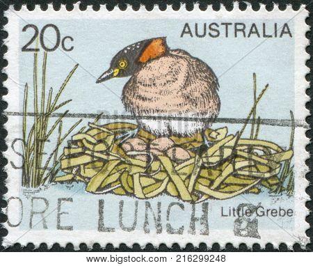 AUSTRALIA - CIRCA 1978: A stamp printed in Australia, shows the Little Grebe (Tachybaptus ruficollis), circa 1978