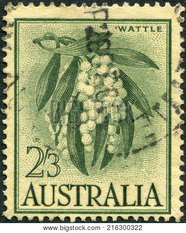 AUSTRALIA-CIRCA 1959: A stamp printed in Australia, shows Wattle (Acacia melanoxylon), circa 1959