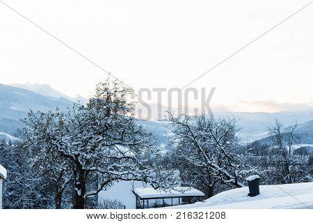 Winter landscape of frosty trees in winter forest in the winter morning. Winter landscape with snowy winter trees. Calm winter nature in sunlight.
