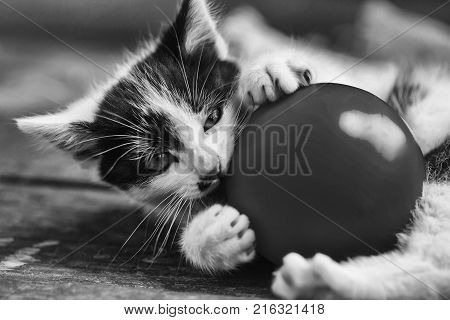 Cute kitten cat pet small domestic animal with whiskers and furry coat black and white playing with yellow ball on wooden board on sunny day outdoors on blurred background
