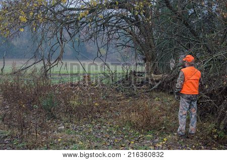 Wearing hunter orange the hunter looks over an open wheat field during deer season.
