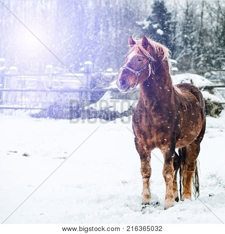 the horse is standing on the snow in the snow