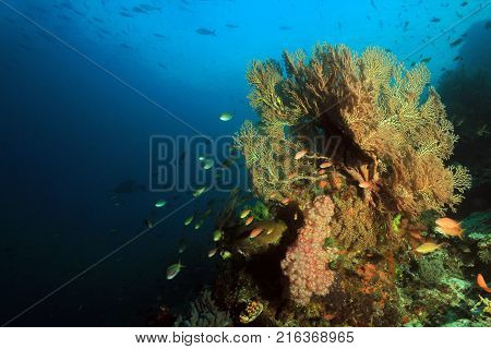 Colorful Coral Reef against Blue Water. Fam Raja Ampat Indonesia