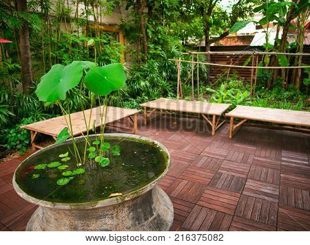 Garden in the terrace, green lotus leaves and other plants with wood benches.