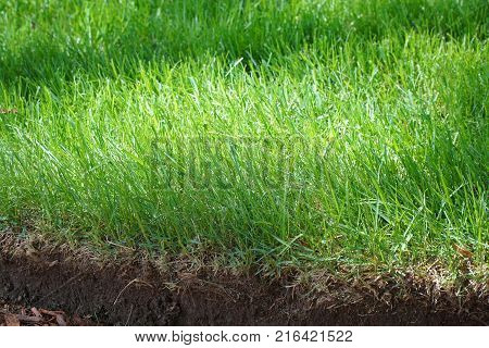 close up on  green grass and underground soil