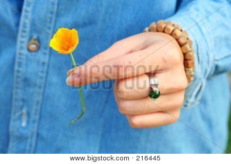 I Have An Orange Flower