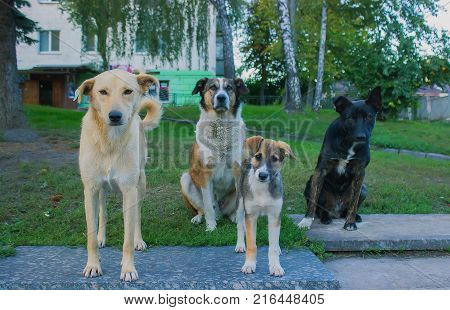 Young four stray dogs looking at camera in the spring grass