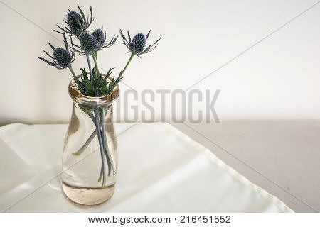 Unusual blue flowers arranged in an old cream bottle on white tablecloth and white background.