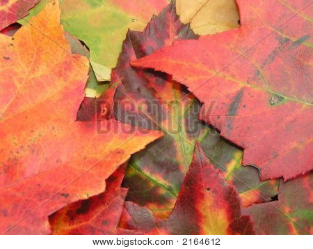 Fall Autumn Color Leaves 3