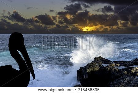 Silhouette of a wild pelican with dramatic sunrise over the ocean - Los Cocoteros, Lanzarote, Canary Islands, Spain
