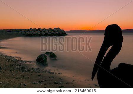 Silhouette of a wild pelican with sunset in Podgora, Makarska Riviera, Croatia