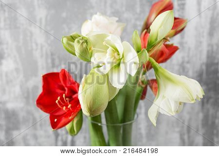 Winter flowers. Amaryllis in a vase watering can standing on a wooden table. On the background old gray wall art