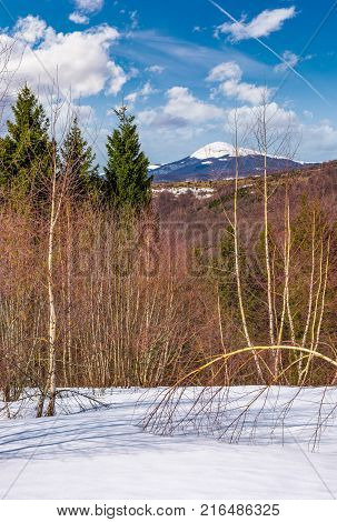 Forested Hills Of Carpathians In Springtime