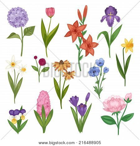 Flowers and floral vector watercolor flowered greeting card invitation for wedding birthday flowering hydrangea iris spring set illustration isolated on white background.