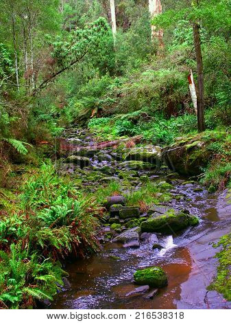 Calm stream in the rainforests of the Great Otway National Park of southern Victoria Australia