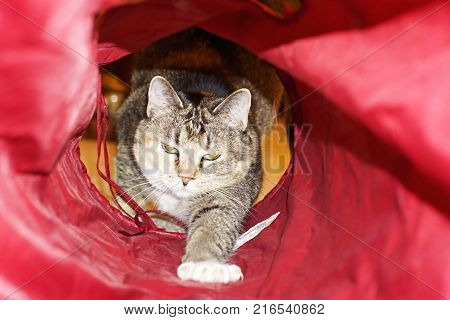 Cute small cat crawling though red tube