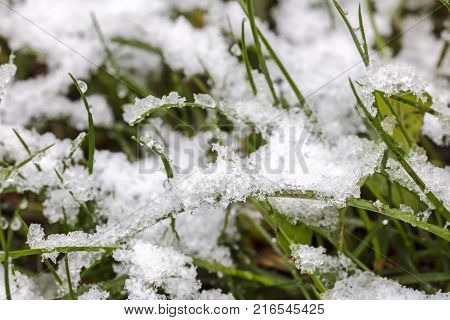 Green Grass Lawn Partially Covered By First Snow