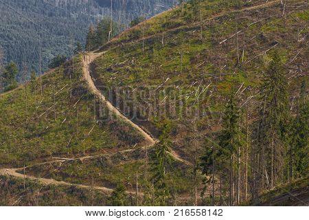 Pine tree forestry exploitation in Carpathian mountain in Romania. Pine stump, result of tree felling. Total deforestation area, cut forest. Panoramic view.
