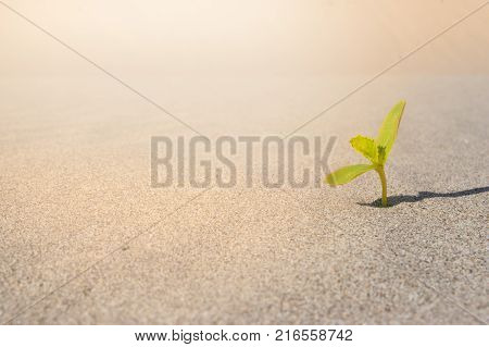Green Leaves Growing on sand. Sprouting in desert climate. Plant sprouting in the desert Sahara. Seedling sand background. One sprout