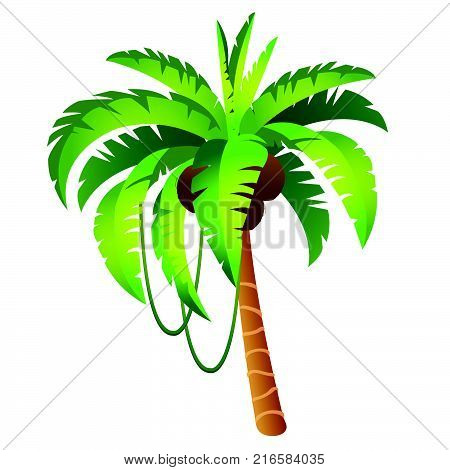 Cartoon palm tree with fruits isolated on white background. The tropical trees. Vector cartoon close-up illustration.
