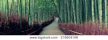 Bamboo Grove panorama in Arashiyama, Kyoto, Japan.