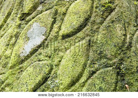 Sheffield, UK - Jan 2015: lichen covered carving detail in Vic Brailsford's untitled bird carving on 18 Jan 2015 in Glen Howe park