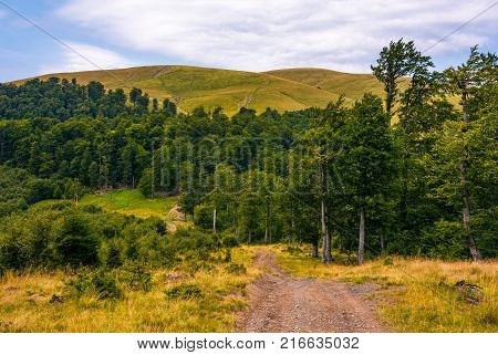 Path Through Birch Forest To The Mountains