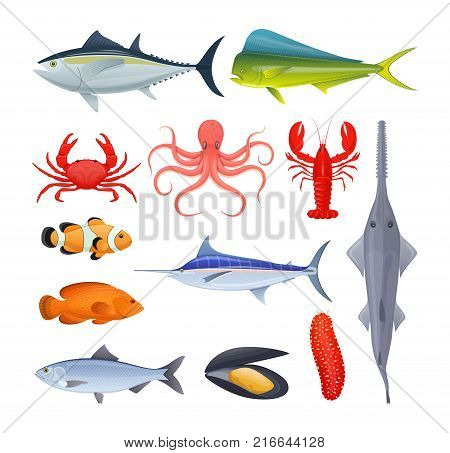 Set of sea and river fish. Different kinds of seafood collection. Fish and shellfish, eating, delicious menu, market fish to around the world. Vector flat illustration.