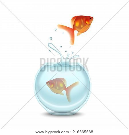 Gold Fish and Glass House Aquarium on a White Background. Vector illustration