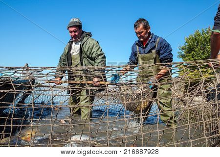 A Fishermen Scoops Up Fish From A Net. Fishing Industry. Fisherman Retrieves Fishes With Landing Net