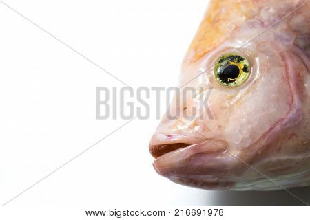Ruby fish on a white background close-up.Ruby fish on a white background close-up.