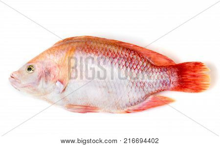 Ruby fish on a white background.Ruby fish on a white background.