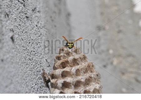 Wasp on honeycomb. Wasp get out from honeycombs